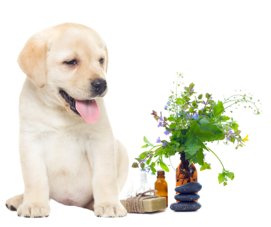 Aroma Scents Naturals - Essential Oil Pet Safety