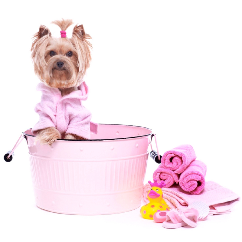 Essential Oil Pet Safety Guidelines