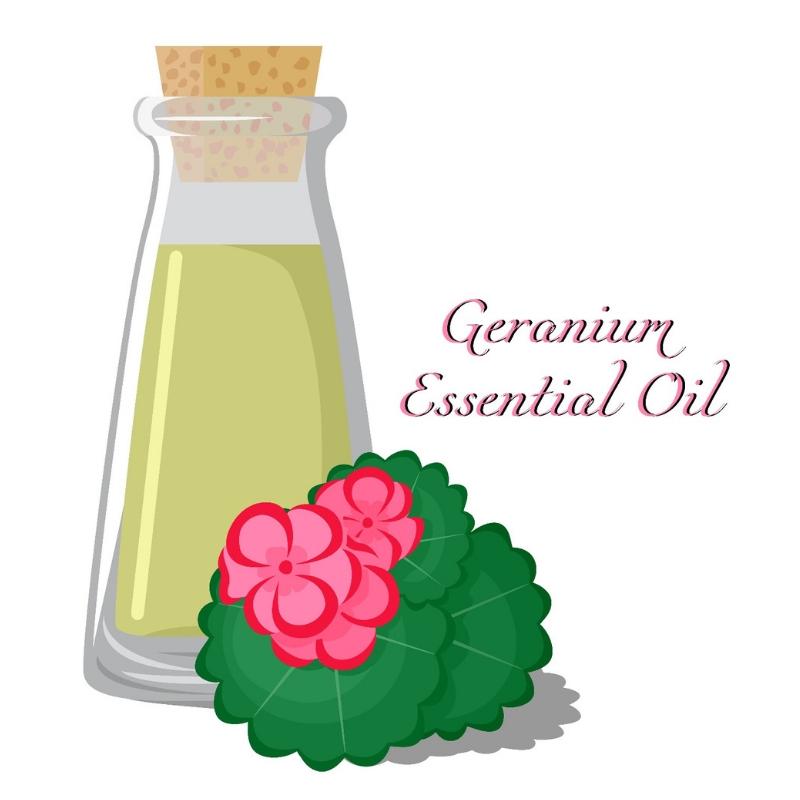Aroma Scents Naturals - Geranium Essential Oil