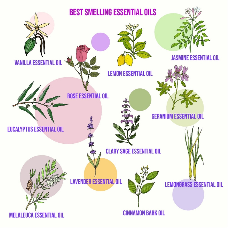 The Effects of Essential Oils on Mind, Body and Spirit